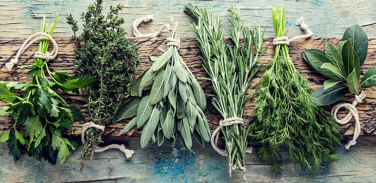 Fresh herb bunches like parsley, thyme, sage, oregano, dill on a wooden board.