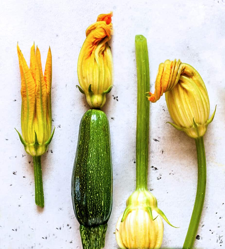Four male and female squash blossoms and a squash.